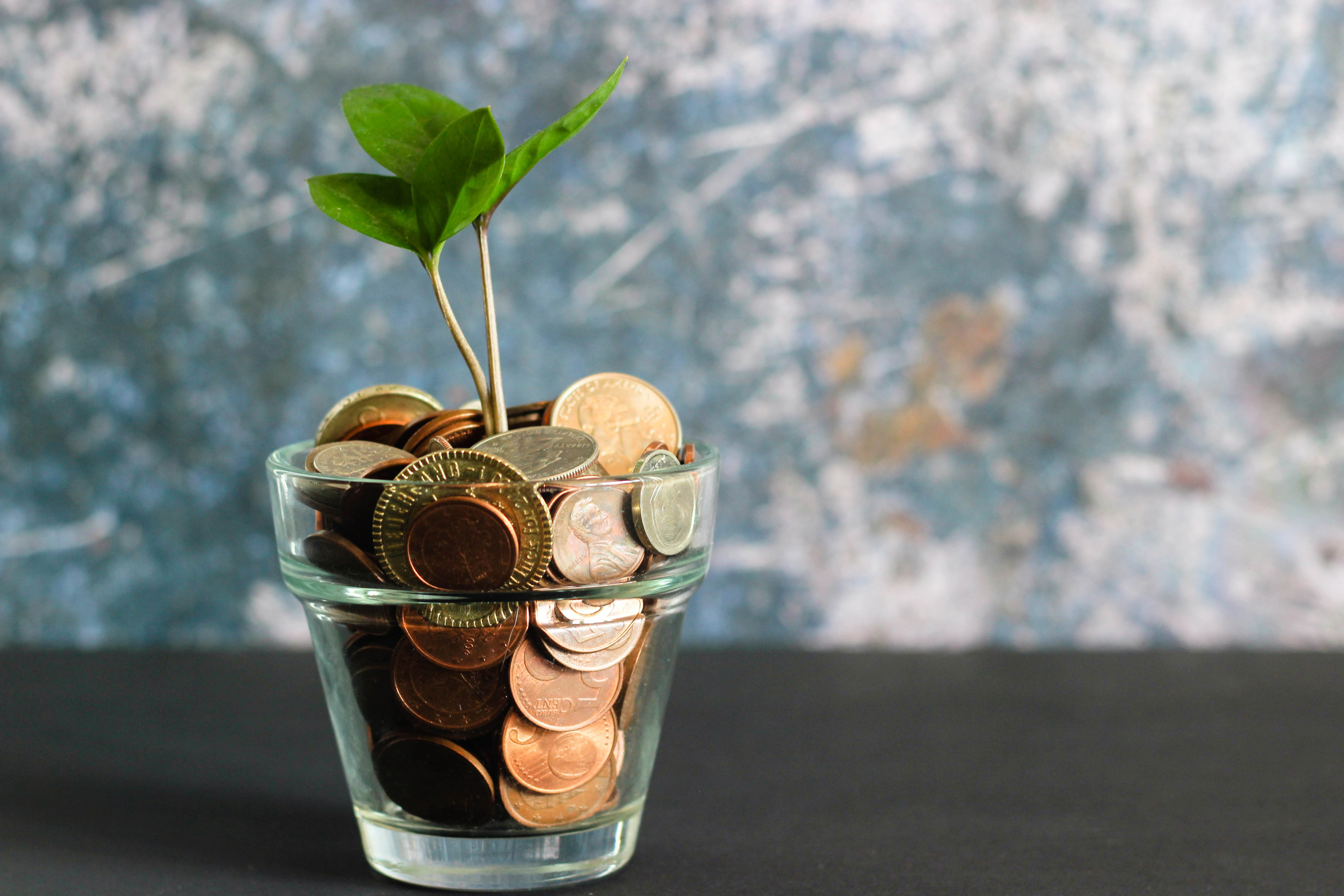 Coins in a jar with a plant growing out of it.